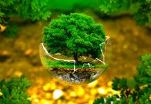 Chứng nhận ISO 14001 cho công ty sản xuất